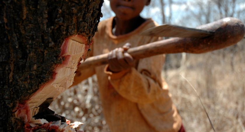 Deforestation in Tanzania - Carbon Tanzania