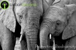 Protecting Biodiversity in Tanzania
