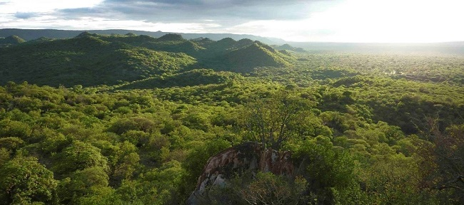 Yaeda Valley Forest Ecosystem - Carbon Tanzania