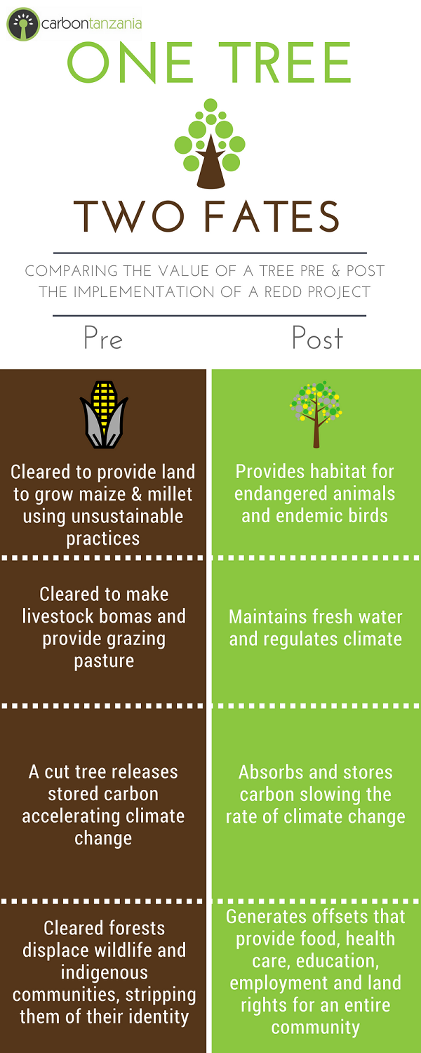 value-of-protecting-a-tree infographic- Carbon Tanzania