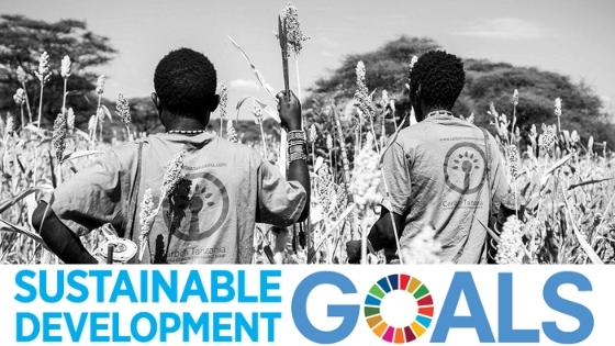 Business opportunities within SDGs - Carbon Tanzania