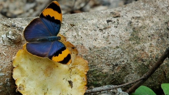 Biodiversity - Carbon Tanzania
