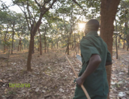 Protecting Forests: an economic opportunity for developing countries