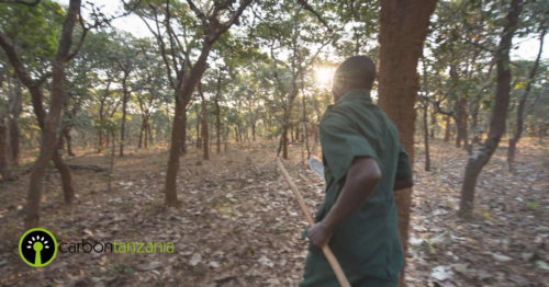 Ntakata forest - Carbon Tanzania