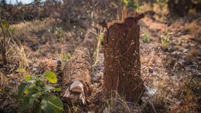 Dealing with Deforestation - Carbon Tanzania