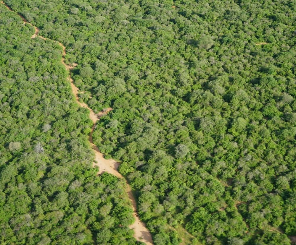 Makame Elephant trail - Carbon Tanzania