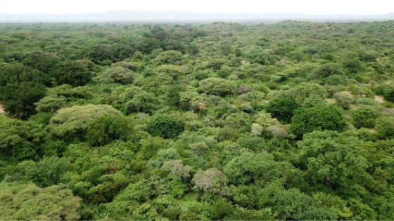 Investing in Forests - Carbon Tanzania