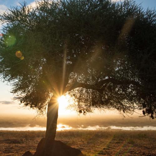 Lone-tree-carbon-tanzania
