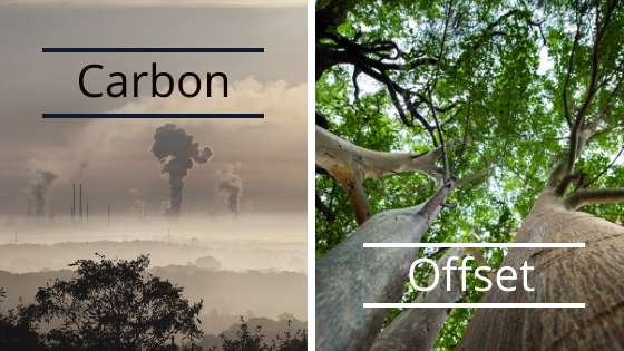 Forest carbon offsets