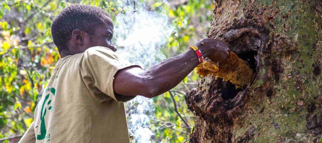Ecosystem services - wild honey