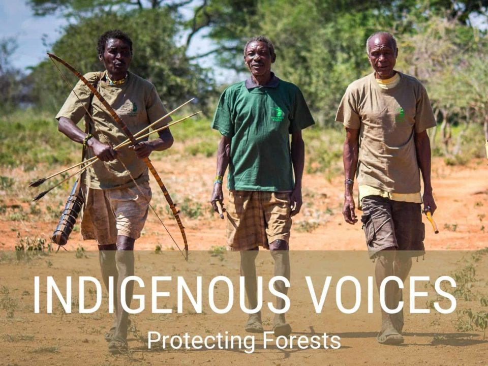 Indigenous voices protecting forests
