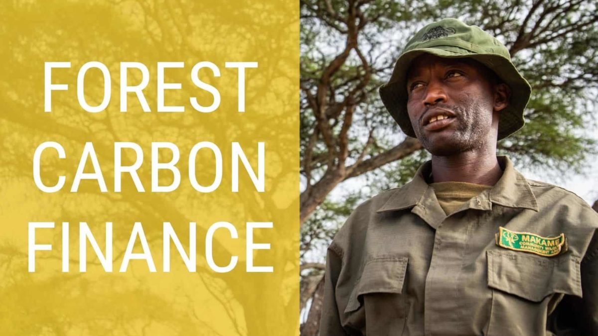 Carbon Finance protecting forests