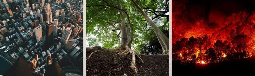 Can carbon finance pay for protecting forests